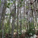 Bomen in San Antonio